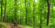 Schöner Moment im Wald